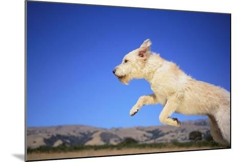 Dog Leaping-DLILLC-Mounted Photographic Print