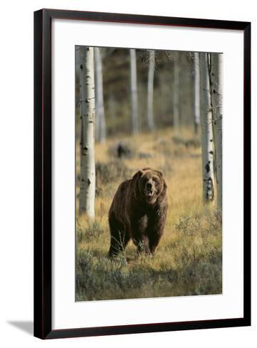 Grizzly Walking among Trees-DLILLC-Framed Art Print