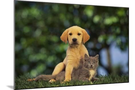 Puppy with Kitten-DLILLC-Mounted Photographic Print