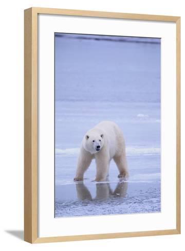 Polar Bear on Ice-DLILLC-Framed Art Print