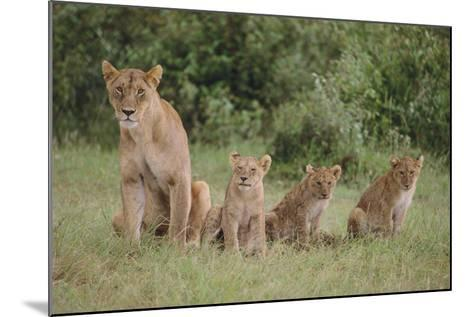 Lioness and Cubs in Grass-DLILLC-Mounted Photographic Print