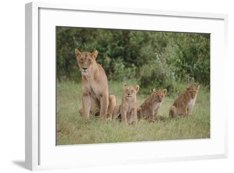 Lioness and Cubs in Grass-DLILLC-Framed Art Print
