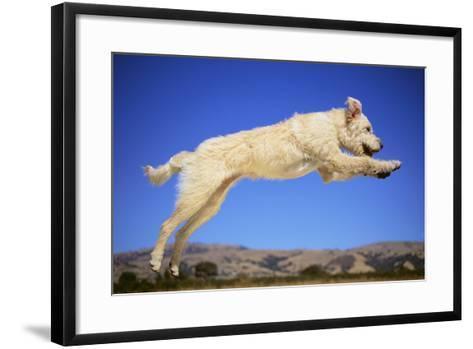 Dog Leaping-DLILLC-Framed Art Print