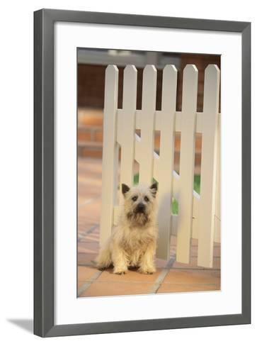 Cairn Terrier-DLILLC-Framed Art Print