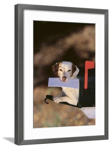 Jack Russell Terrier Fetching the Mail-DLILLC-Framed Art Print