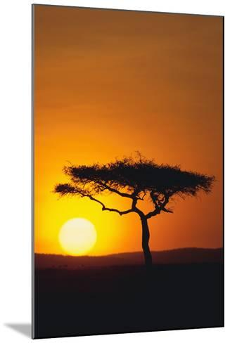 Sunset behind a Tree-DLILLC-Mounted Photographic Print