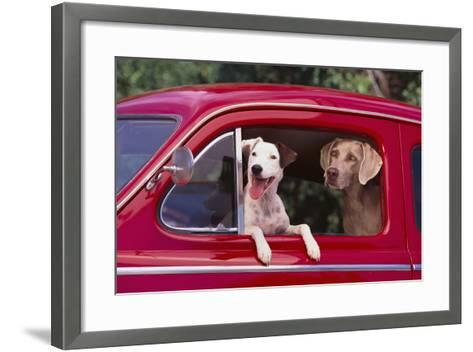 Jack Russel and Weimaraner Sitting in a Car-DLILLC-Framed Art Print