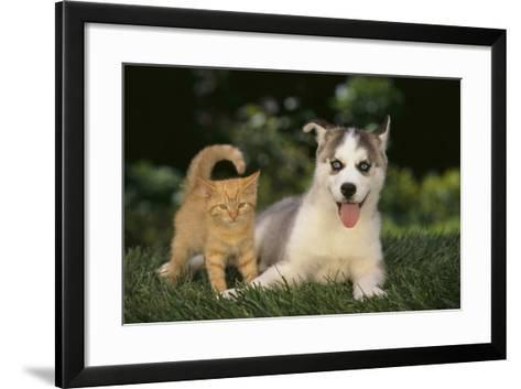Siberian Husky Puppy and Kitten-DLILLC-Framed Art Print