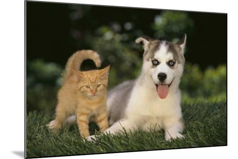 Siberian Husky Puppy and Kitten-DLILLC-Mounted Photographic Print