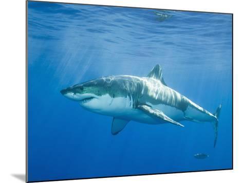 Great White Shark-DLILLC-Mounted Photographic Print