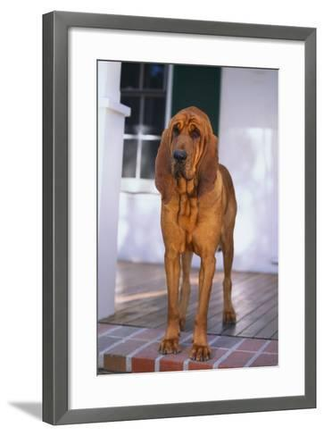 Waiting on the Front Porch-DLILLC-Framed Art Print