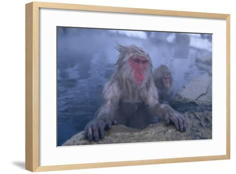 Japanese Macaques in Hot Spring-DLILLC-Framed Art Print