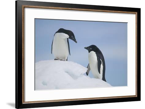 Pair of Adelie Penguins on an Iceberg-DLILLC-Framed Art Print