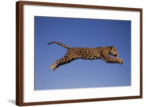 Jaguar Jumping through Sky-DLILLC-Framed Art Print