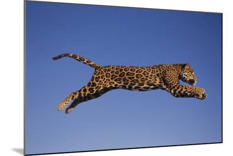 Jaguar Jumping through Sky-DLILLC-Mounted Photographic Print