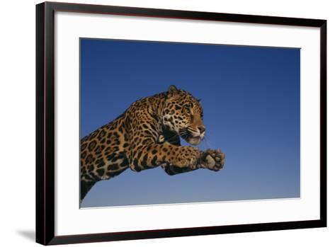 Leaping Jaguar-DLILLC-Framed Art Print