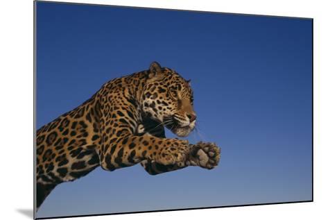 Leaping Jaguar-DLILLC-Mounted Photographic Print