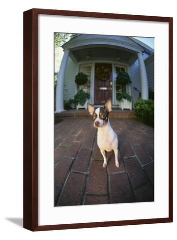 Chihuahua Dog-DLILLC-Framed Art Print
