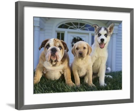Gang of Dogs-DLILLC-Framed Art Print