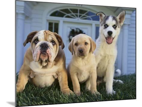 Gang of Dogs-DLILLC-Mounted Photographic Print