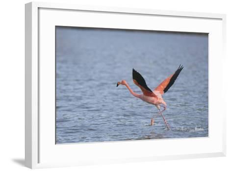 American Flamingo-DLILLC-Framed Art Print