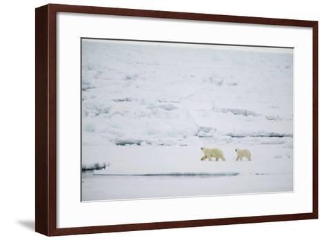 Pair of Polar Bears on Sea Ice-DLILLC-Framed Art Print
