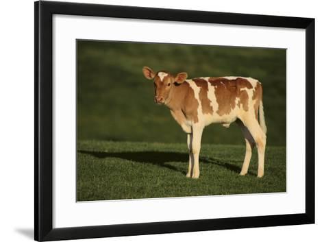 Holstein-Jersey Mix Calf-DLILLC-Framed Art Print