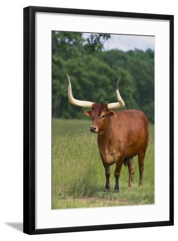 Cow in the Pasture-DLILLC-Framed Art Print
