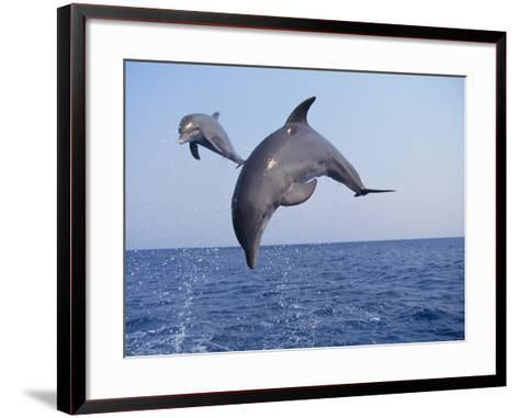 Dolphin Breaching the Oceans Surface-DLILLC-Framed Art Print
