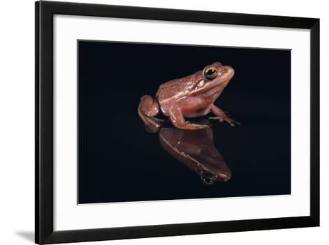 Gray Tree Frog-DLILLC-Framed Art Print