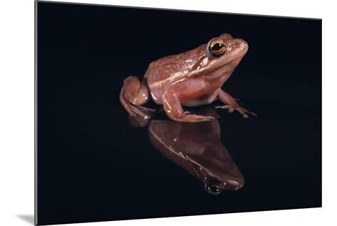 Gray Tree Frog-DLILLC-Mounted Photographic Print