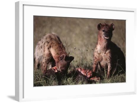 Spotted Hyenas Feeding on Carcass-DLILLC-Framed Art Print