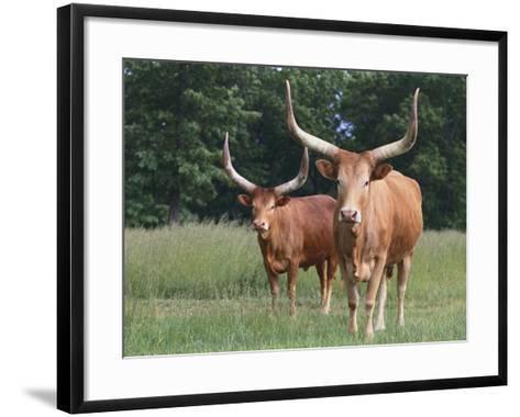 Cattle in the Pasture-DLILLC-Framed Art Print
