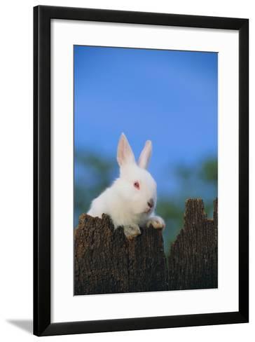 Bunny Peeking over a Fence-DLILLC-Framed Art Print