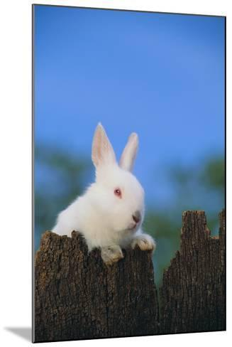 Bunny Peeking over a Fence-DLILLC-Mounted Photographic Print