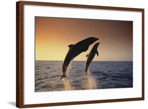 Dolphin Breaching the Oceans Surface-DLILLC-Framed Art Print