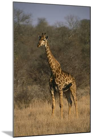 Giraffe-DLILLC-Mounted Photographic Print