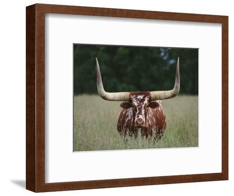 Longhorn Watusi Mix-DLILLC-Framed Art Print