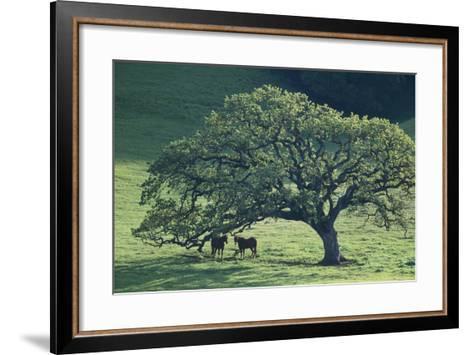 Horses in a Pasture-DLILLC-Framed Art Print