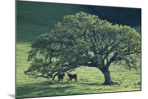 Horses in a Pasture-DLILLC-Mounted Photographic Print