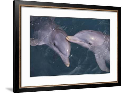 Dolphins-DLILLC-Framed Art Print