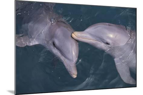 Dolphins-DLILLC-Mounted Photographic Print