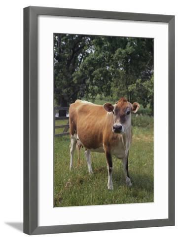 Jersey Cow-DLILLC-Framed Art Print