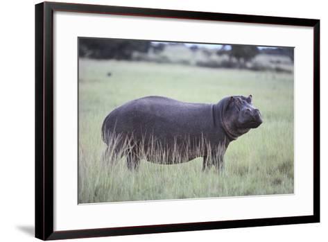 Hippopotamus in the Savanna Grass-DLILLC-Framed Art Print