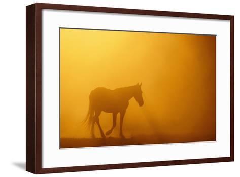 Wild Horse-DLILLC-Framed Art Print