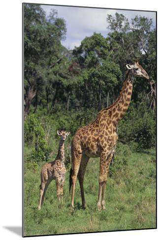 Giraffe Parent and Young-DLILLC-Mounted Photographic Print
