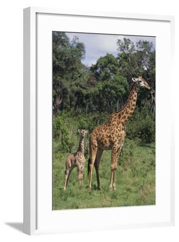 Giraffe Parent and Young-DLILLC-Framed Art Print