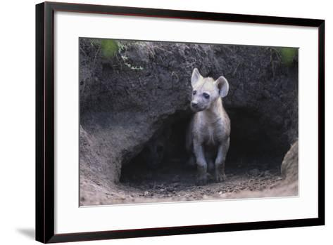 Spotted Hyenas Looking out from Den-DLILLC-Framed Art Print
