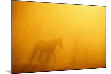 Wild Horse-DLILLC-Mounted Photographic Print