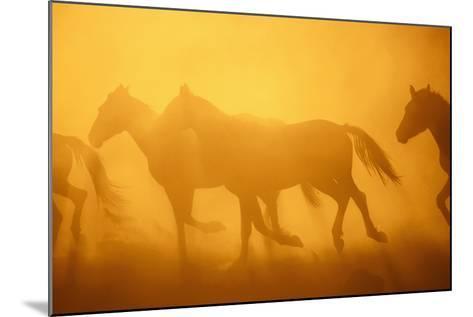 Wild Horses-DLILLC-Mounted Photographic Print
